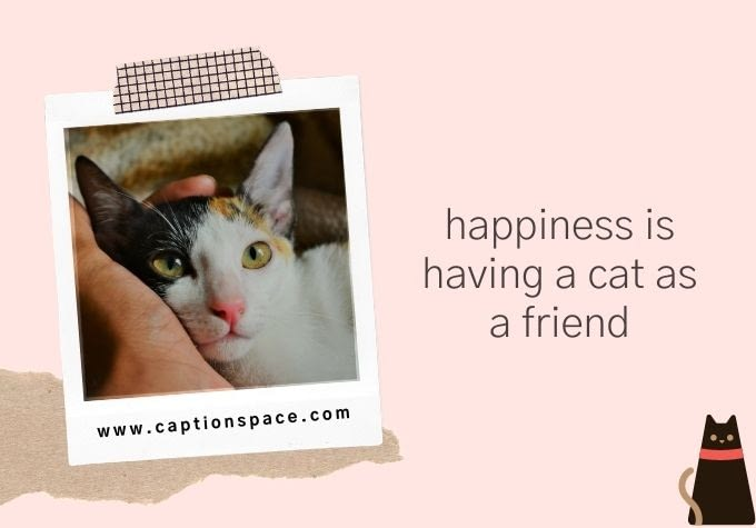 Cat Captions for Instagram - Caption Space