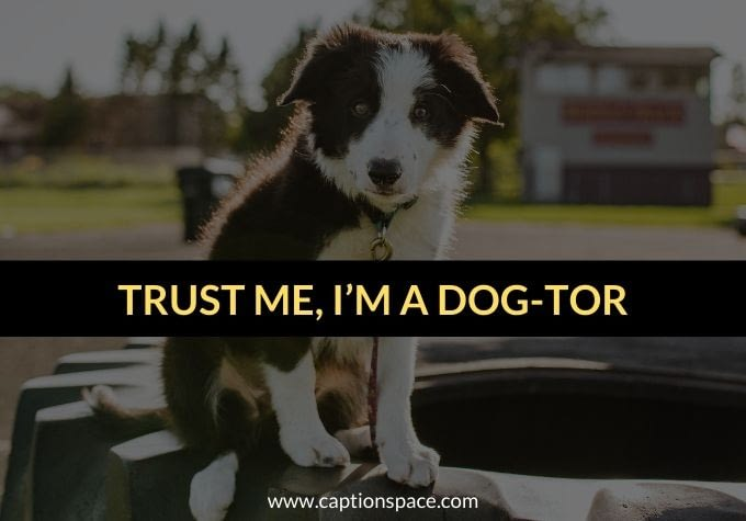 Dog Captions for Instagram - Caption Space