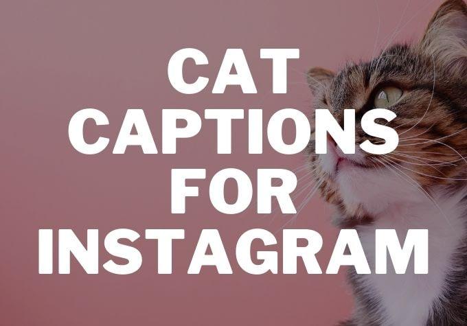 50 Best Cat Captions for Instagram 2020