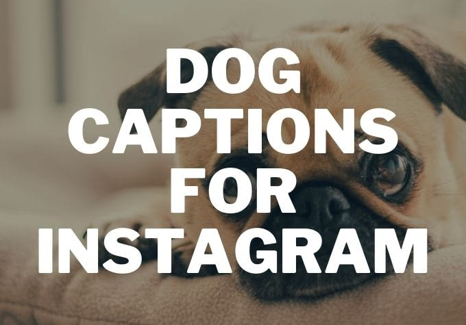 50 Best Dog Captions for Instagram 2020